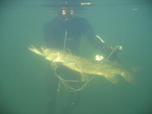 Подводная охота в пресноводном